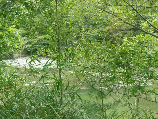 池よこサイト(640)