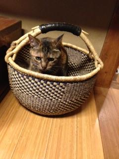 猫バスケット