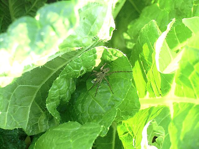 クモちゃん