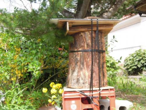 ミツバチの巣箱移動前