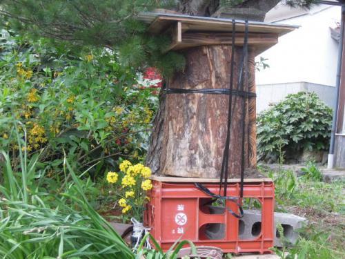 日本蜜蜂 丸胴H25
