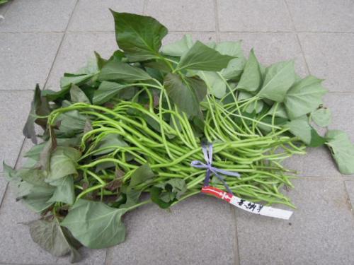 安納芋 有機栽培 H25