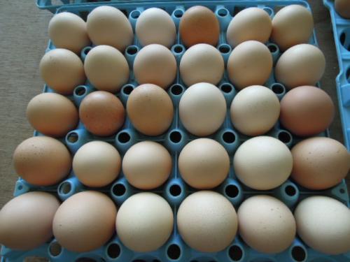 卵と一緒に