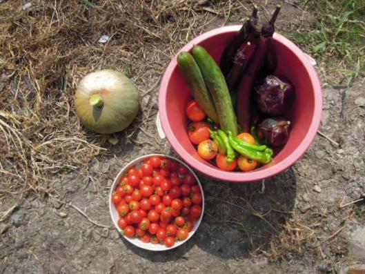 野菜セットの盆土産
