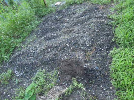 ニンニク畑を耕す