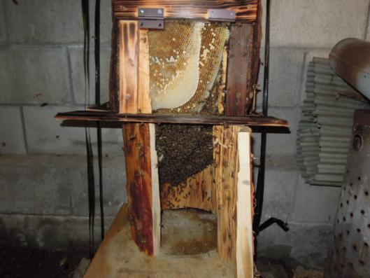 日本蜜蜂内検 0913