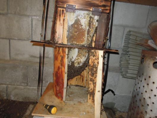 日本蜜蜂内検h25923