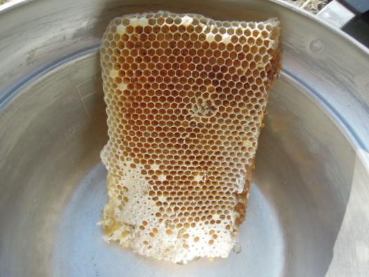 日本蜜蜂 巣のかけら