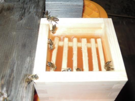 日本蜜蜂の給餌 2510