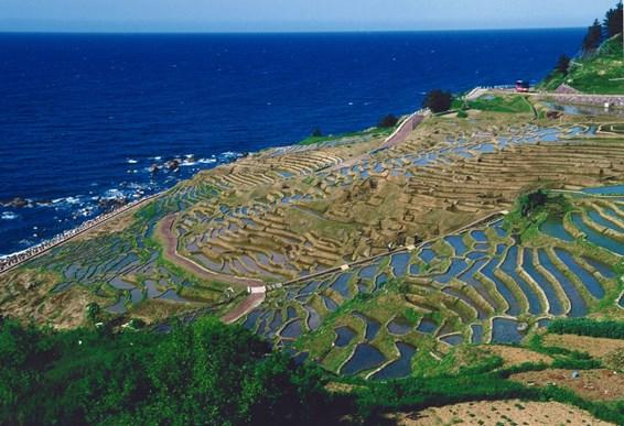 千枚田(春の水面)