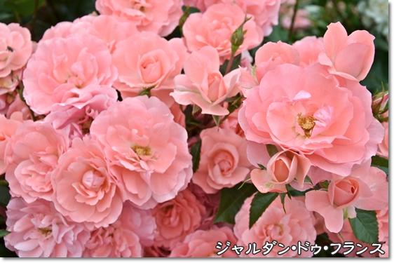 DSC_6458.jpg