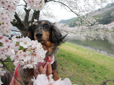 桜と実結2013