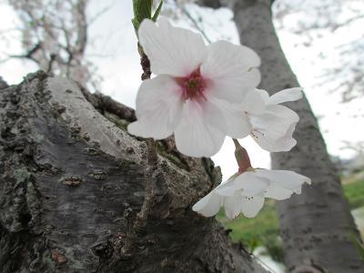 生命力溢れる花