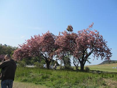 八重桜の見える広場へ~