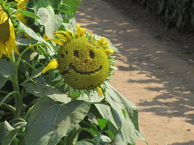 笑顔の向日葵さん