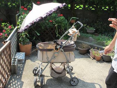 日傘を取り付けてもらったよー
