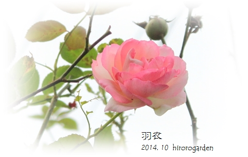 IMG_302212.jpg
