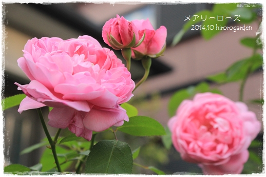 IMG_313711.jpg