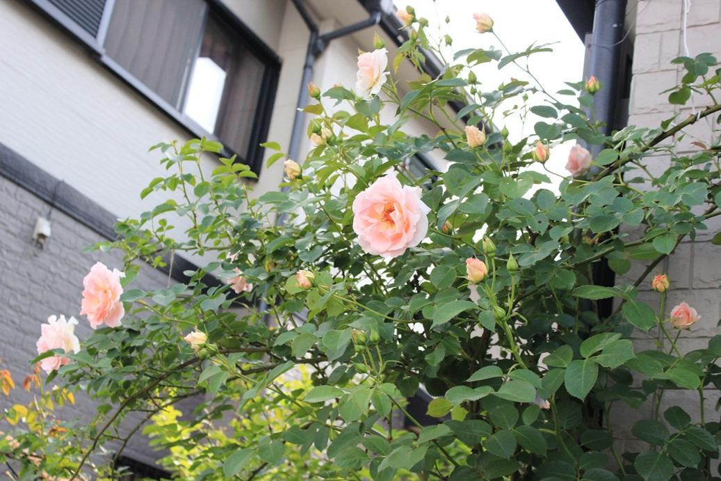 IMG_76571.jpg