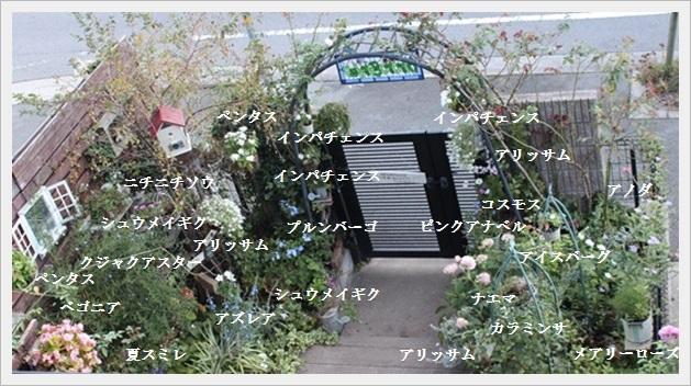 IMG_99362.jpg