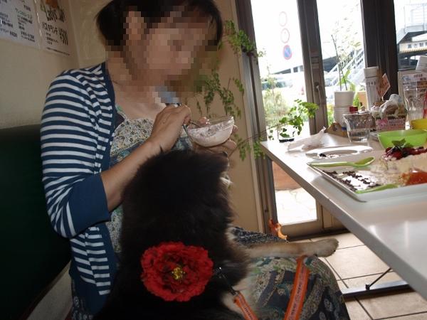 ママ、はやくちょうだいでしゅ。すみれのケーキ。このために朝食抜いてきたんだから!!
