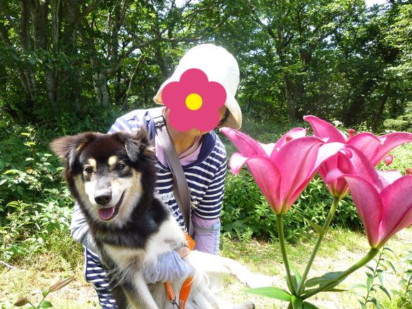 ゆりの花とすみれ