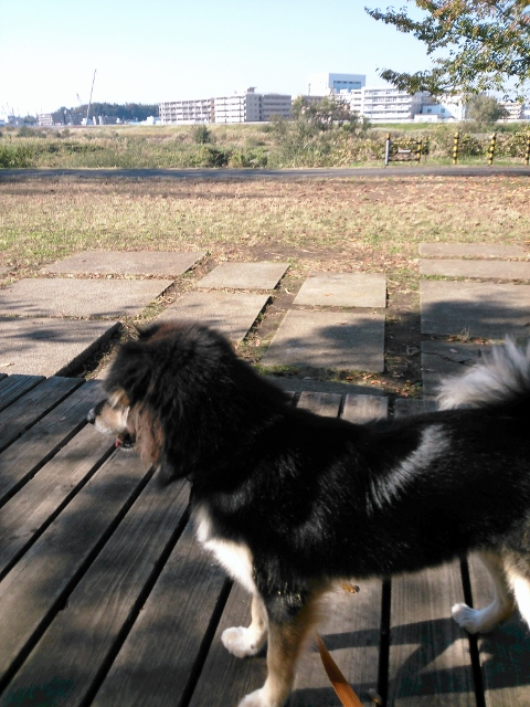 鶴見川です