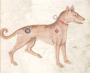 medievalpetnames-300x246.jpg