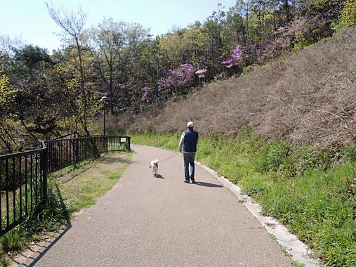 4月13日 散歩1