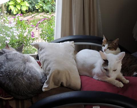 6月10日 猫トリオ