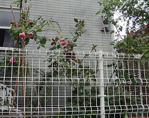 6月27日 東の庭