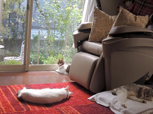 10月10日 猫トリオ