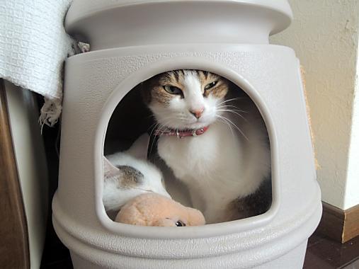 10月18日 猫ハウス
