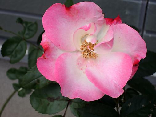 11月8日 花がすみ