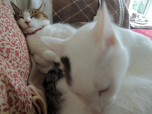 11月9日 猫トリオ