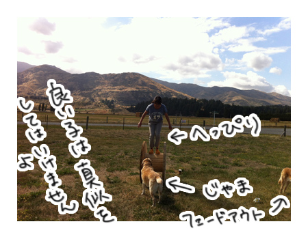 羊の国のラブラドール絵日記シニア!!「あっちでも、こっちでも」写真5