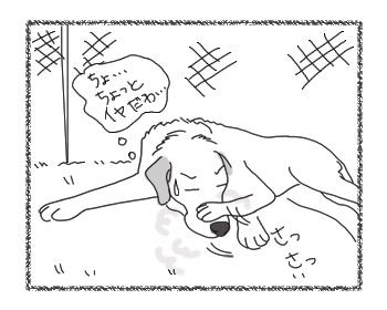 羊の国のラブラドール絵日記シニア!!「風上におく」4