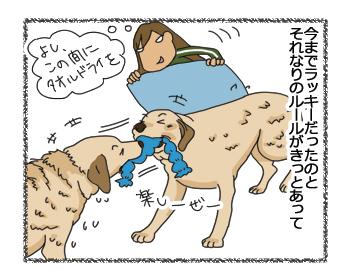 羊の国のラブラドール絵日記シニア!!「クロエとエビスと保険のハナシ」3