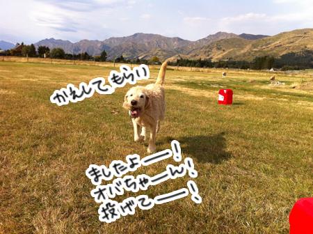 羊の国のラブラドール絵日記シニア!!「ラルフ」6