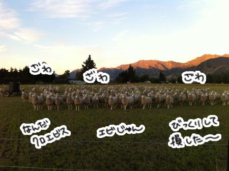 羊の国のラブラドール絵日記シニア!!「The 嗅覚」2