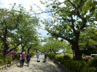 鎌倉「喫茶室ピナコテカと鶴岡八幡宮」20