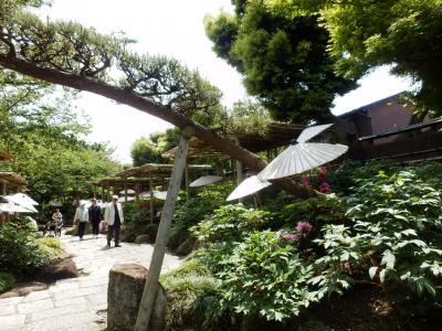 鎌倉「喫茶室ピナコテカと鶴岡八幡宮」11
