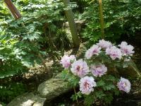 鎌倉「喫茶室ピナコテカと鶴岡八幡宮」18