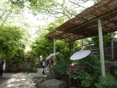 鎌倉「喫茶室ピナコテカと鶴岡八幡宮」12