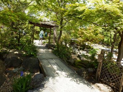 鎌倉「喫茶室ピナコテカと鶴岡八幡宮」13