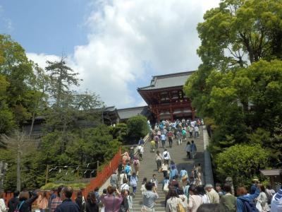 鎌倉「喫茶室ピナコテカと鶴岡八幡宮」6