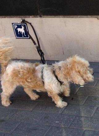 フィンランド犬2