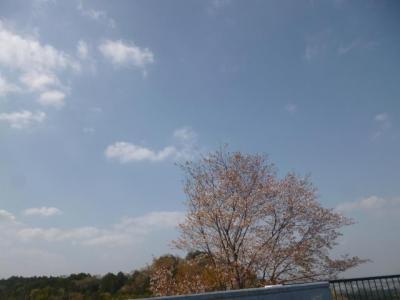 毛呂山総合公園から白金平へ_201304