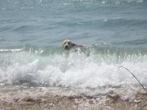 波のりつん