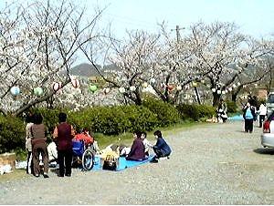 s-江津市 桜